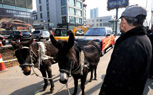 Range Rover Owned In China Returns Vehicle Via Donkey