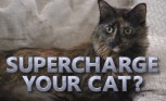 Mobile App Makes Cats into Sports Cars
