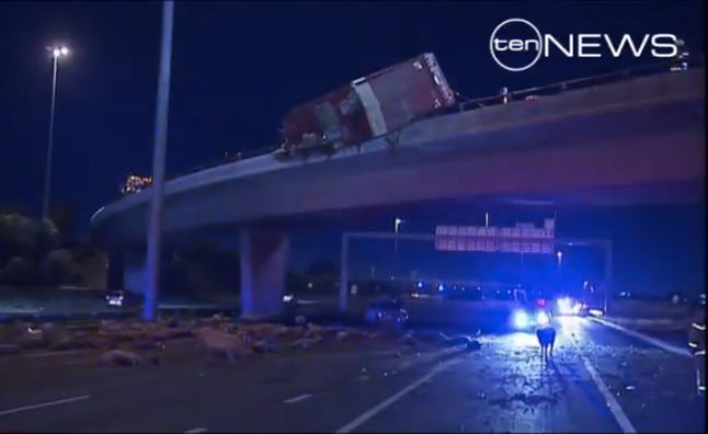 Truck Overturns on Freeway Dropping Hundreds of Sheep – Video