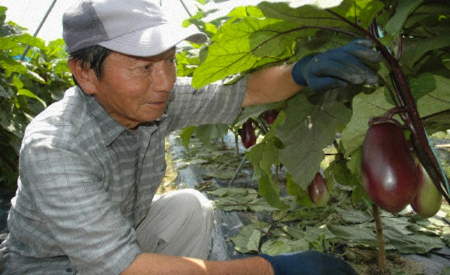 Toyota Japan Retirees Spending Golden Years Farming