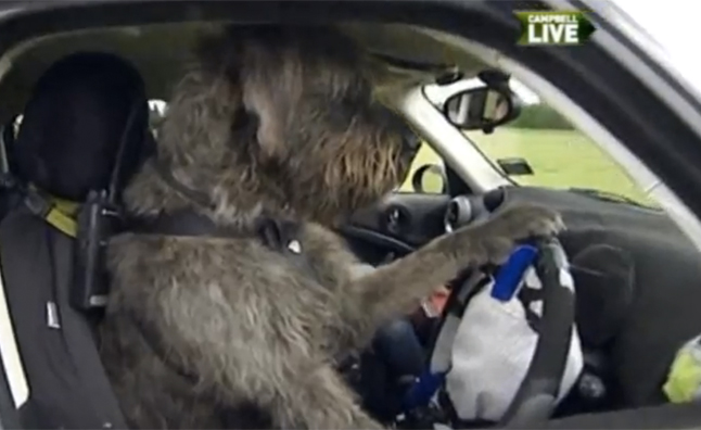 Dog Trainer Teaches Man's Best Friend to Drive – Video