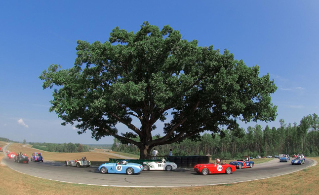 Virginia Tech Hopes to Clone VIR's Fallen Oak Tree
