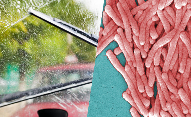 Windshield Washer Fluid Can Harbor Deadly Bacteria