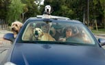 Poll: Pets Are Another Distraction While Driving