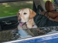 nissan-rogue-dogue-project-08