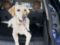 nissan-rogue-dogue-project-09