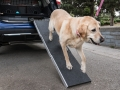 nissan-rogue-dogue-project-19