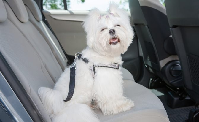 best dog seat belts harness