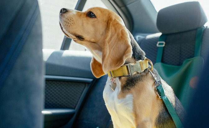 best dog seatbelts